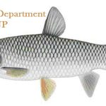Fisheries Department UP