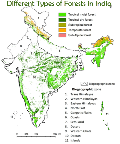 Different Types of Forests in India
