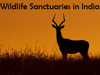 Top 5 Wildlife Sanctuaries in India