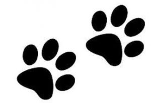 how to draw a cat paw